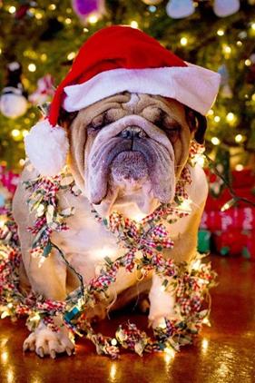 «Χριστουγεννοφοβία»